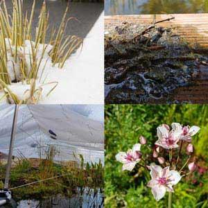 Teichpflege und Teichreinigung