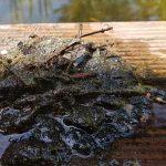 Teichberatung Teichprobleme