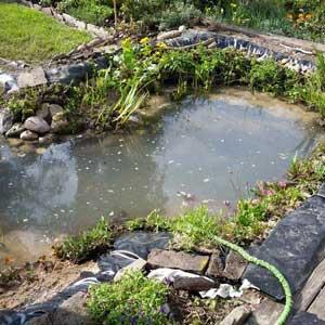 Teichbau und Teichsanierung