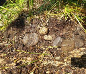 Eingewachsene Steine