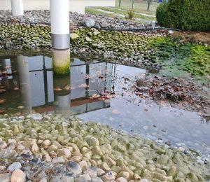 Teichpflege Firmenteich