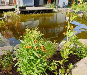 Wasserfläche nach der Sanierung